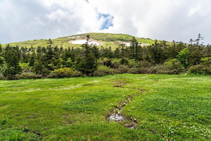 初夏の森吉山