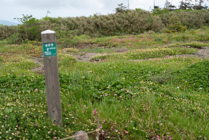 森吉山の高山植物