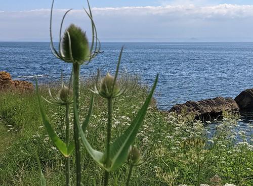 St Monans flowers , East Neuk, Fife