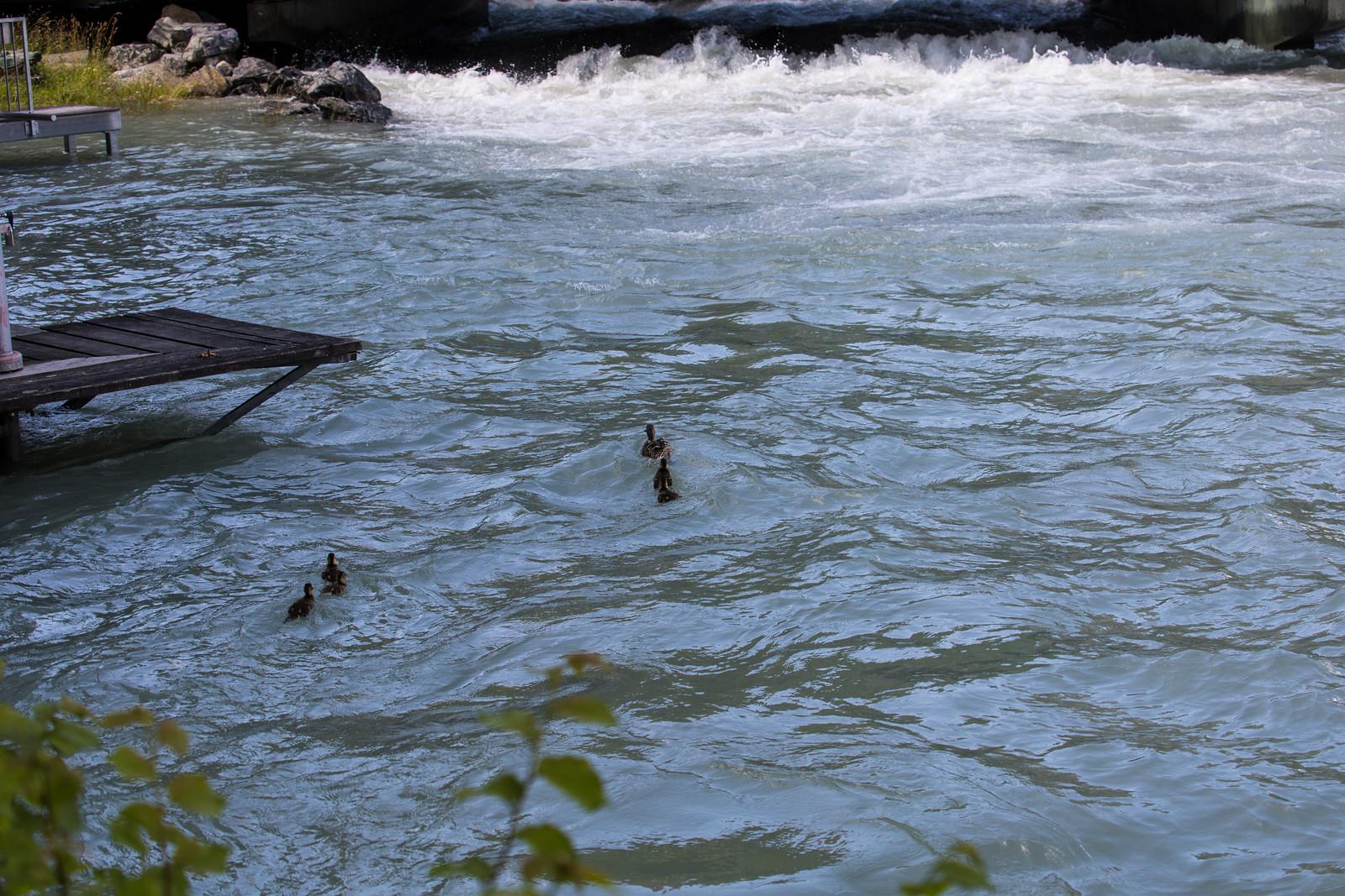 Hochwasser Bern 11.7 (20)