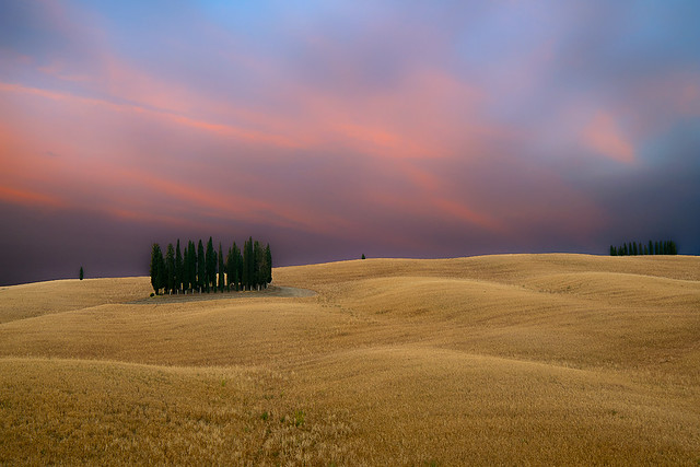 Cypresses in San Quirico at sunset - Tuscany