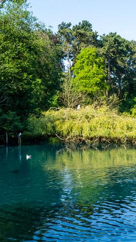 Heron on recumbent willow, West Park