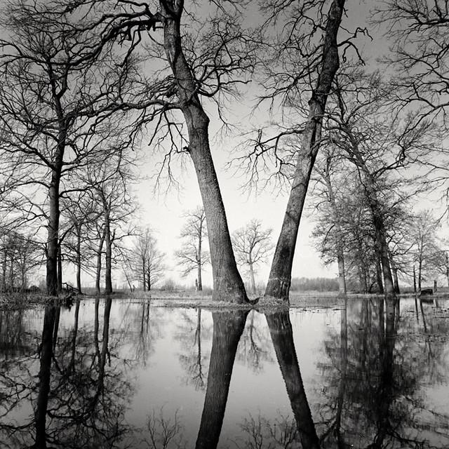 Floodplain forest, Homeĺskae Palesse, Belarus, spring. 2021