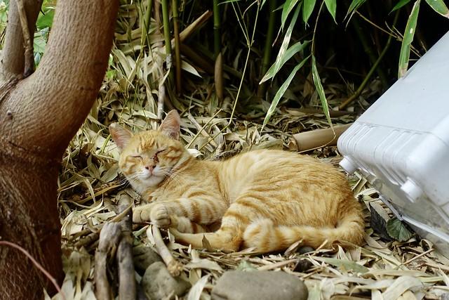 Today's Cat@2021−07−12