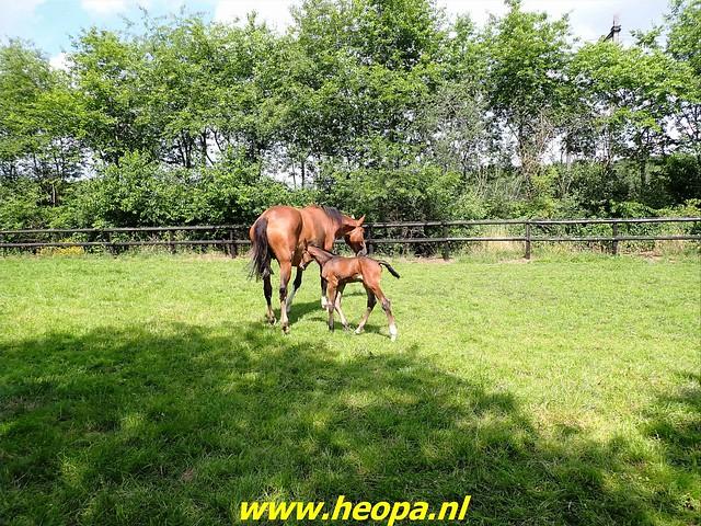 2021-07-09 Westerborkpad Meppel-Hoogeveen (66)