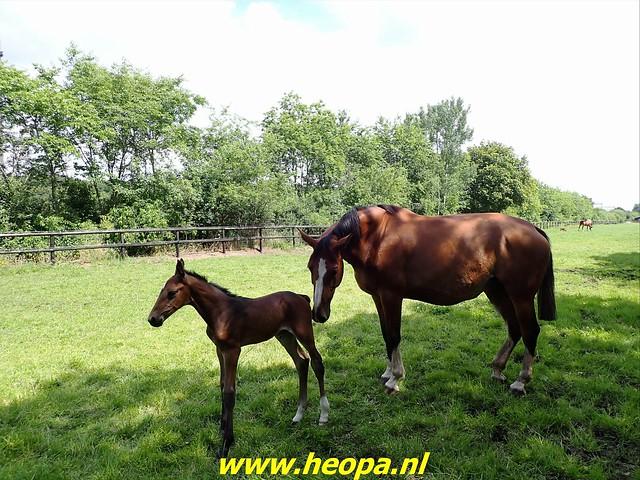 2021-07-09 Westerborkpad Meppel-Hoogeveen (65)
