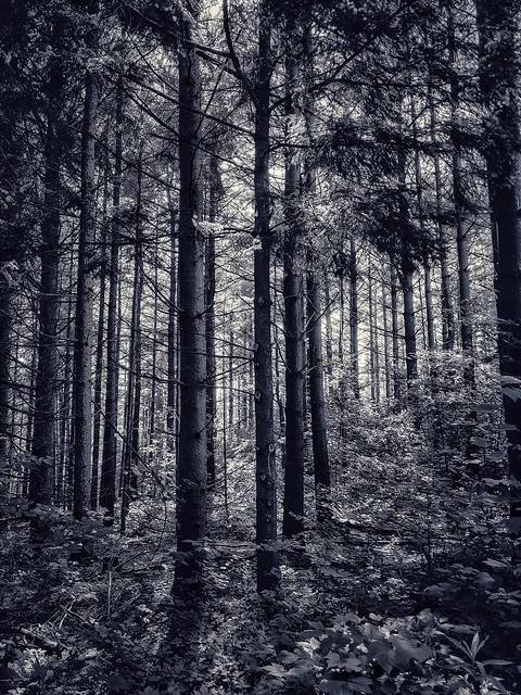 forest glow✨