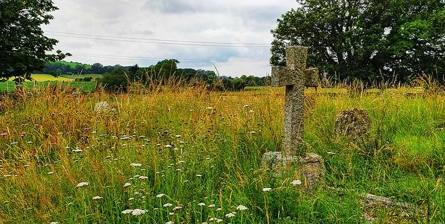 Churchyard Meadow - Botolphs