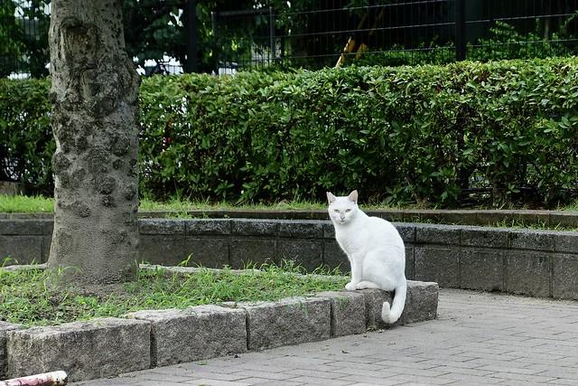 Today's Cat@2021−07−13