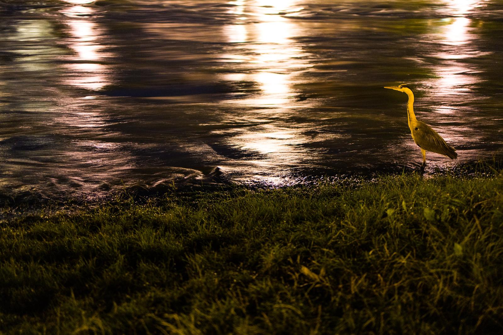 Hochwasser Bern 11.7 (33)