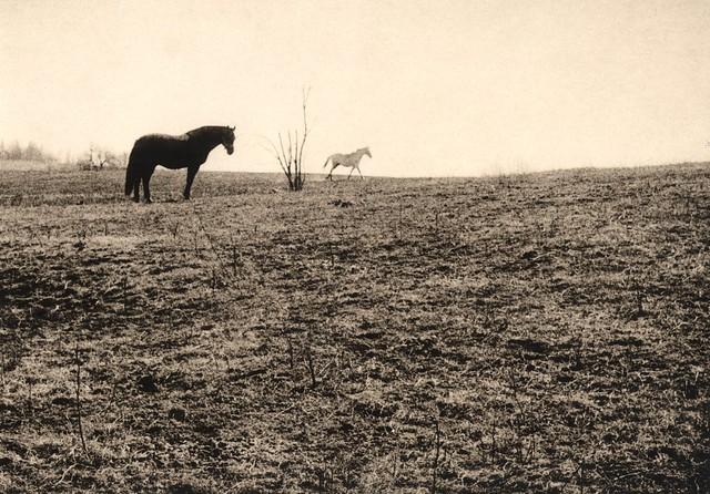 Horses, near Podolsk