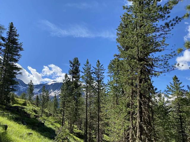 Boschi e montagne in Suldental