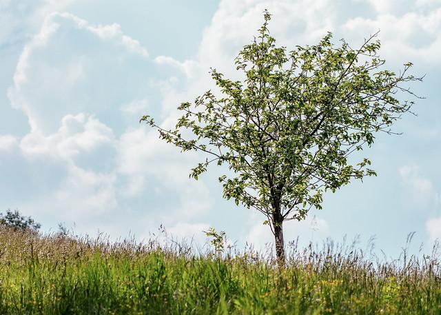 Super telephoto tree