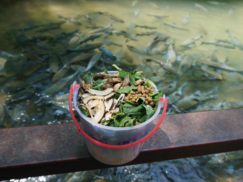 Fish Cave Mae Hong Son