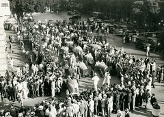 Automóveis do Circuito da Gávea, Rio de Janeiro, 1936