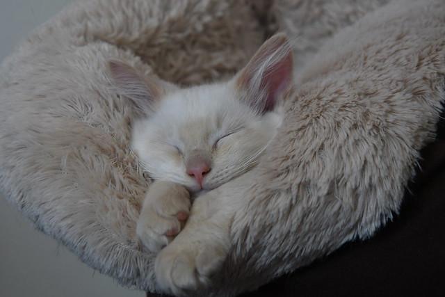 Cute cat - fluffy loveliness