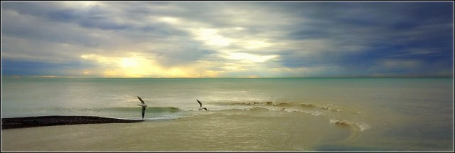 olé, du vent dans les plumes, du vent dans les vagues !