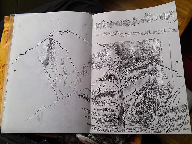 Patagonia Tree @ Refugio Torre Central