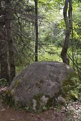 McIntosh Run Community Trail
