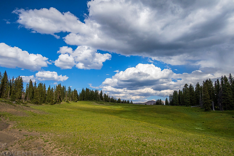 Meadow & Clouds