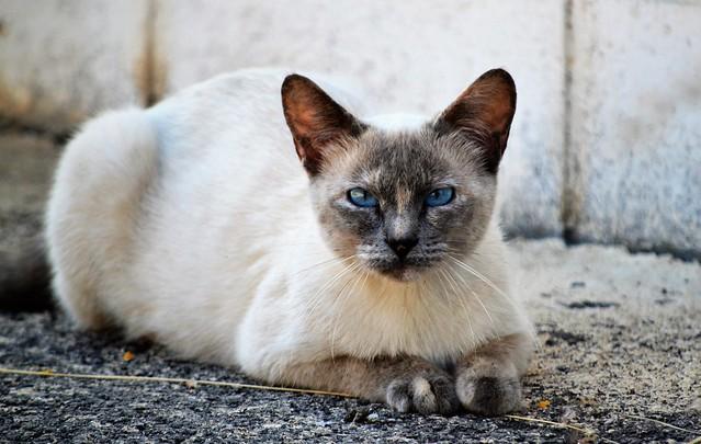 Adorable gatita