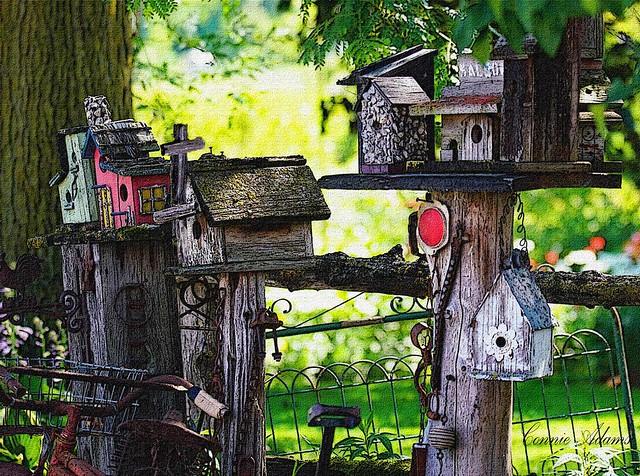 Bird Houses on display