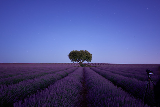 DSC_1016 4 Lavender