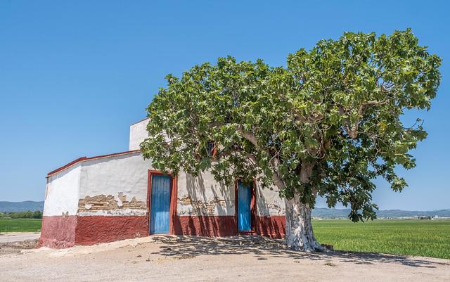 Caseta i arbre al Delta de l'Ebre