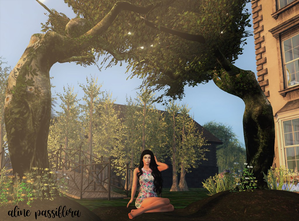 Under the Aranyani Trees