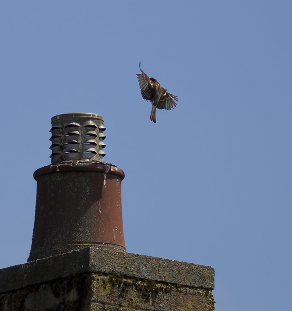 Sparrow-.landing