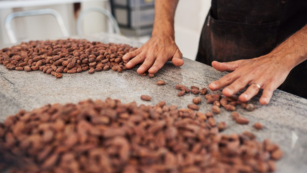 A factory worker sorting cocoa beans