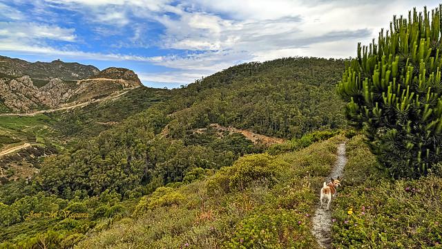 Senderos de Ceuta: estoy aqui: guau, guau! / Ceuta trails: I'm here: guau, guau!