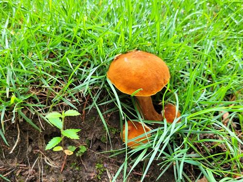 Sudden mushrooms