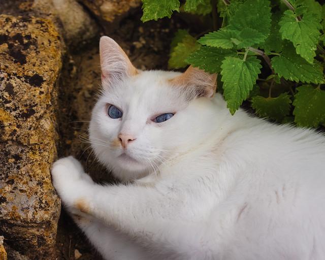 Between a rock and a cat-mint
