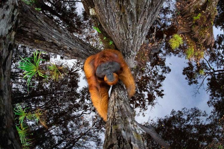 Inspiração: Fotógrafo do Ano 2021 da Nature TTL