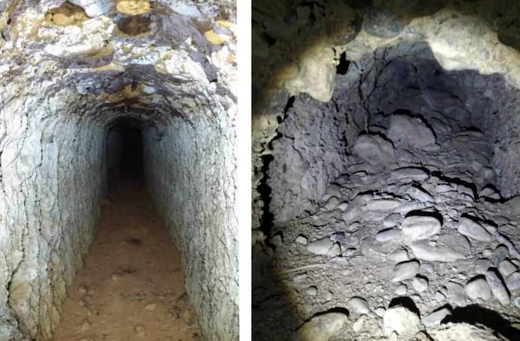 石頭營日軍坑道幾十年來更發展成獨特的生態,成為當地蝙蝠、昆蟲及動物的的棲息地。照片來源:石頭營論壇