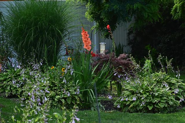 DSC_9822 Back yard flowers