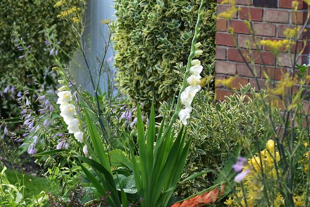 DSC_9388 Front flowers