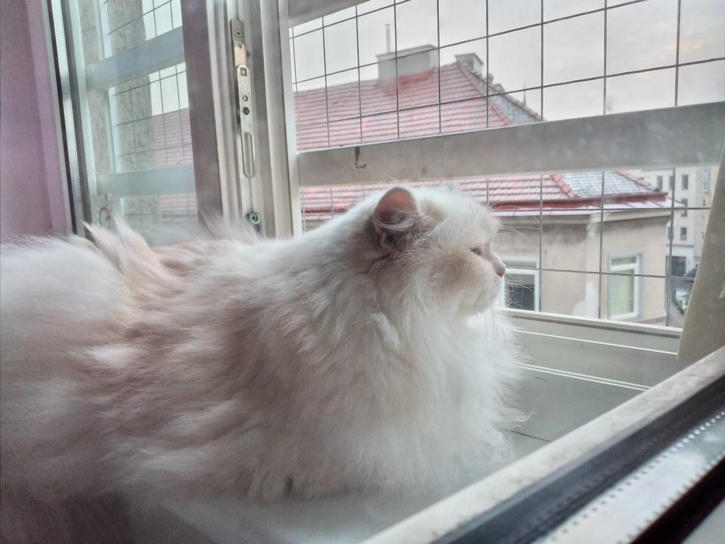 Jessie am Fenster am 14.07.21