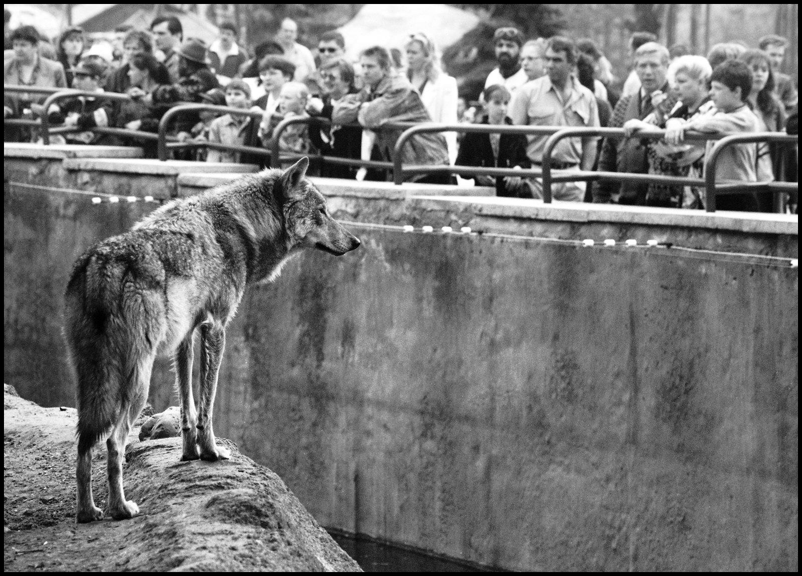 1990-е. Зоопарк