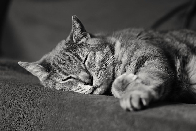 Cat in Black and White...