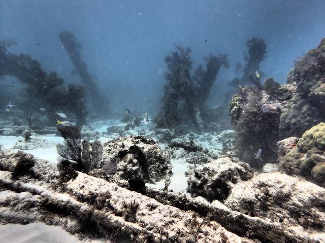 17 JULY 2021 AM Dive Key Largo Florida Keys With The Best PADI Scuba Operator