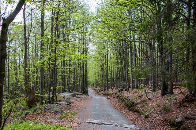 Hiking - Waldhäuser