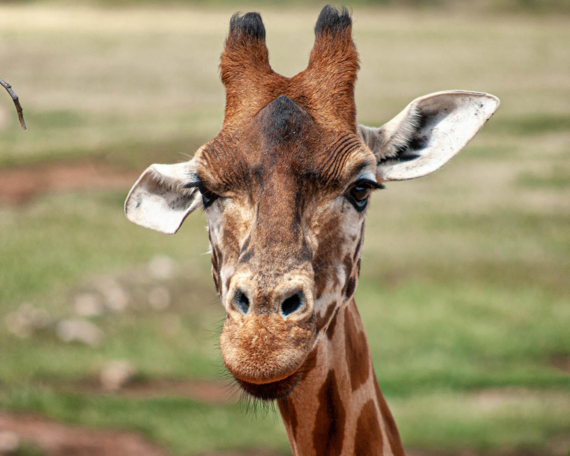 Monarto Safari Park