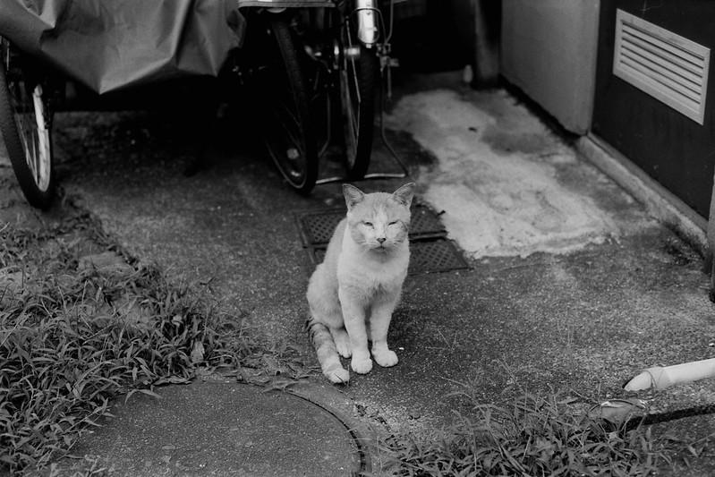 02 20210713Leica M2+Carl Zeiss Planar50mm f2 0+Fujifilm ACROS100池袋三丁目谷端川緑道の猫 茶白