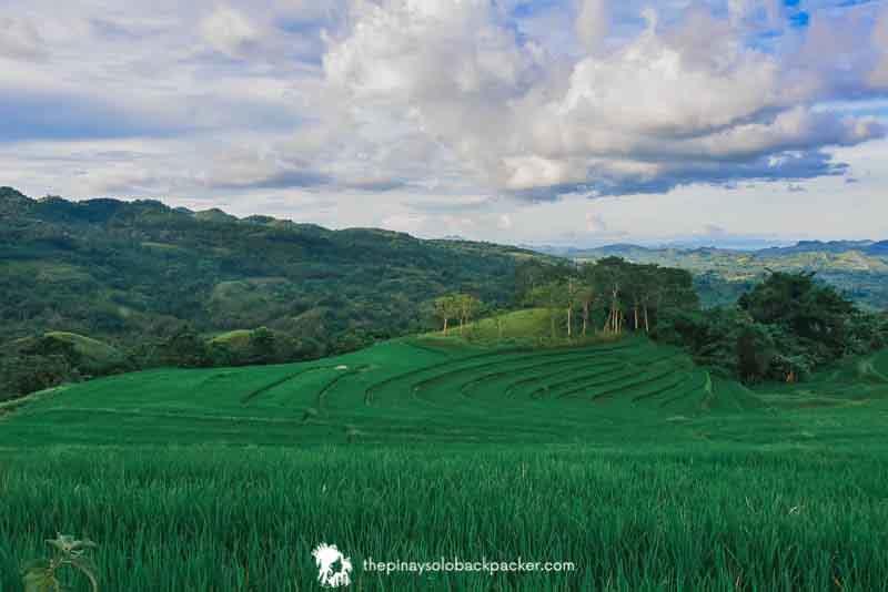 candijay rice terraces