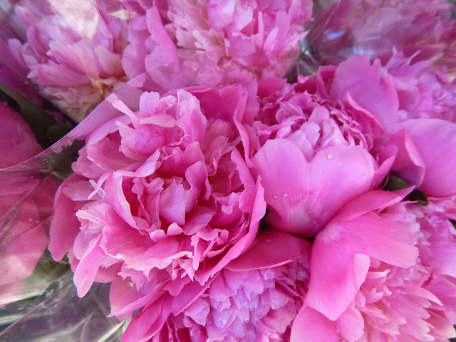 Fresh pink Peonies for sale
