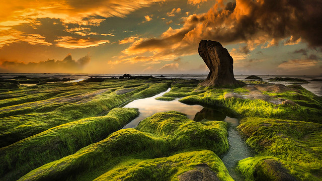 Vietnam Coast with Seaweed