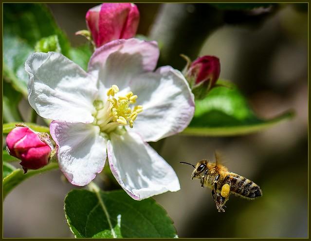 Pollen in sight