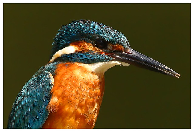 Another of the River Stour Kingfisher from last week